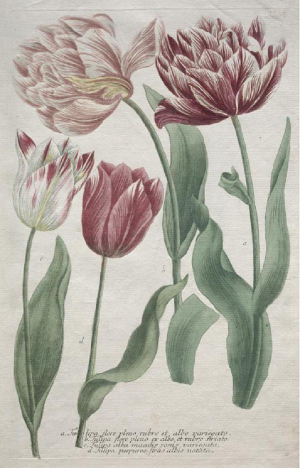 bartholomäus-seuter-johann-jacob-haid-incisione-cleveland-museum-of-art